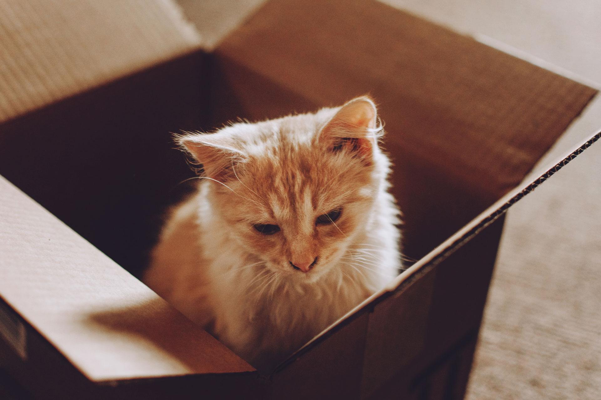 sad cat in a cardboard box