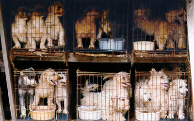 The Horrors of Puppy Mills