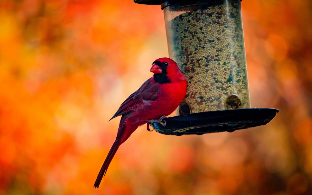 Alert for Bird Lovers: Remove Your Feeders, For Now